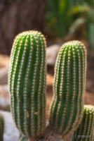 Kaktus 2012