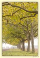 Nussbäume Pillichsdorf