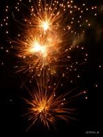 Feuerwerksblumen