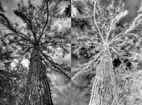 Parallelwelt Baum