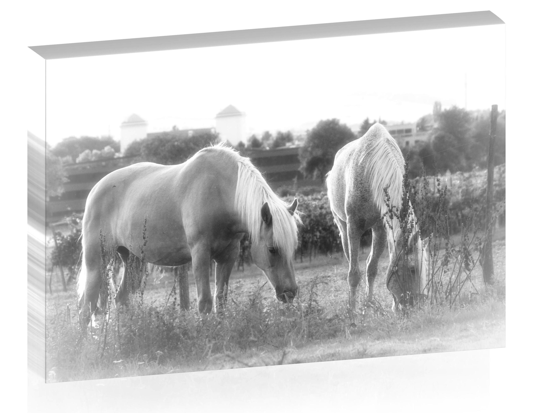 Pferde im Boindlfeld